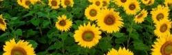 Fiera d'estate - 21 giugno 2020 - Sant'Agata Fossili